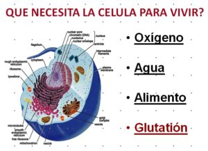Glutation antioxidante